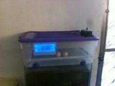 Vendo chocadeira de 40 a 50 ovos totalmente automatica digital  RJ