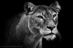 Amazing B&W wild animals photography by Wolf Ademeit from Germany