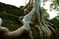 Ta Prohm | Cambodia | It was used as a location in the film Tomb Raider  http://just-read-it.cz/hinduisticke-chramove-mesto-angkor-wat/