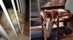 16 Dogs Who Cannot Possibly Be Comfortable