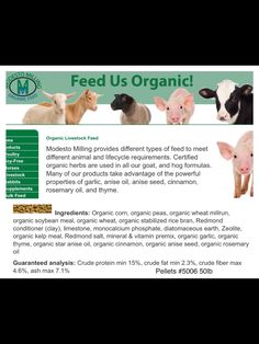 Another organic Non GMO food for mini pigs. Pig Feed, Pot Belly Pigs, Mini Pigs, Pet Pigs, Organic Herbs, Milling, Livestock, Montana, Minis
