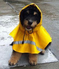 Prepared Pup