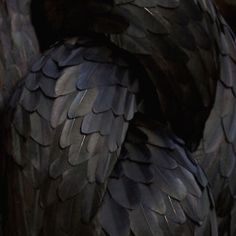 black feathers.