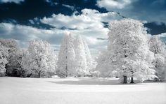 50 schönsten Bäume aus der ganzen Welt - Real Fotos