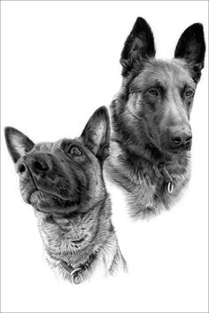 Pencil portrait drawings of dogs from photos Pencil Portrait Drawing, Photo Online, Dog Cat, Corgi, Photographs, Portraits, Horses, Pets, Drawings