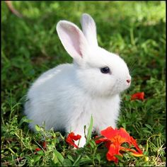 My Pumpkin by PatriciaVazquez on DeviantArt Beautiful Creatures, Animals Beautiful, Cutest Bunny Ever, Rabbit Wallpaper, Cute Baby Bunnies, Fluffy Bunny, White Rabbits, Cute Little Animals, Poodles
