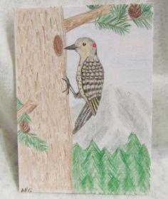 ACEO Northern Flicker Hand Drawn Original Artwork #zibbet #aceo