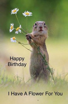 Ideas Funny Happy Birthday Meme Animals For 2019 Funny Happy Birthday Meme, Happy Birthday Wishes Quotes, Birthday Blessings, Happy Birthday Images, Happy Birthday Greetings, Humor Birthday, Happy Birthday Squirrel, Friendship Birthday Wishes, Ground Squirrel