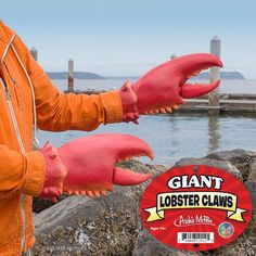 """Set of two realistic latex lobster claws, each 14.5"""" long. http://www.walletburn.com/Giant-Lobster-Claws_617.html"""
