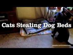 cat vs dog - YouTube