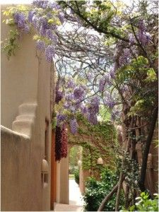 Adobe walls offer the perfect backdrop for Santa Fe's spring colors.