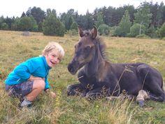 Ullekalvs Zephyrus, black colt born 2017 out of MVR's Bunny