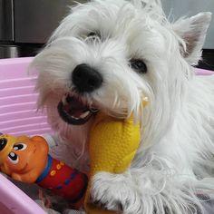 Maltempo, ma io ho i miei giocattoli e mi diverto così  Isabel ❤