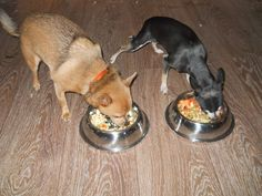 Homemade Dog Food   As I get more into the homesteading lifestyle I find more and more things to make instead of buy. We have 2 little ...