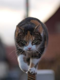 eagle-eye cat.  778:    Raubkatze mira  (via 26martin)