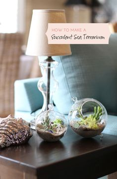 How To Make A Succulent Sea Terrarium - I won't keep the mermaid theme, but I'm excited about a plant I can't easily kill!