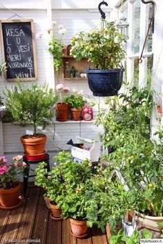 kesähuone,kasvi,puutarhakasvi