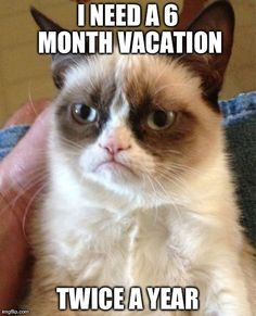 Permanent vacation. #grumpycat #vacation