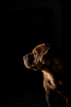 a little chocolate shar pei mix, like Maci Baby Dogs, Pet Dogs, Dogs And Puppies, Dog Cat, Animals Beautiful, Cute Animals, Beautiful Creatures, Cocker, Mundo Animal