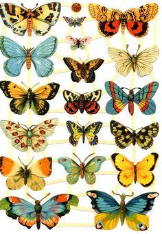 Láminas de cromos troquelados- Mariposas 01