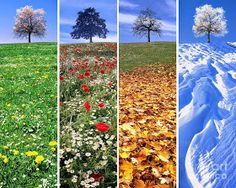 Changing Seasons Changing seasons are our guide to change, Dynamism conquering the static boredom. Four Seasons Art, Seasons Of The Year, Weather Seasons, Montessori Materials, Science And Nature, Beautiful Landscapes, Plants, Photos, Outdoor
