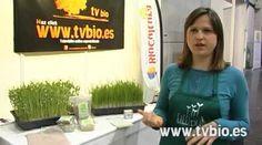 Desde BioCultura Valencia, Elisa de Lilliput Living Foods no explica los beneficios de la hierba de trigo y cómo hacer este pasto de trigo.