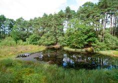 Exploring the prehistoric bogs of #Delamere #Forest.