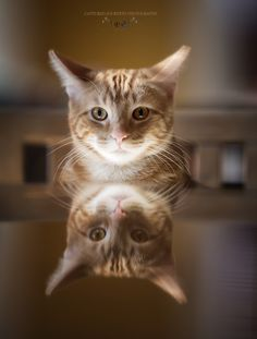 Jaffa the Cat by Kelly Schneider on 500px