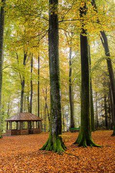 autumn forest, Echallens, Canton of Vaud, Switzerland
