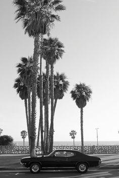 California Photography, Ocean Avenue, Santa Monica Wall Decor, Black and White Fine Art Print, Beach, Vintage, Palm Trees, Summer, Travel