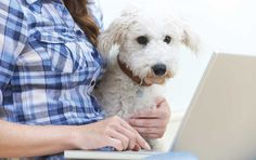 Escrever um post para seu blog pet é bem mais simples do que parece. Confira as dicas que preparamos para te ajudar nessa tarefa.