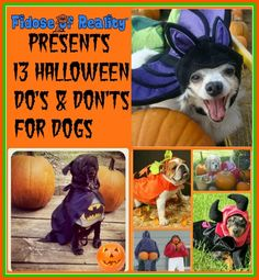 13 Dog Halloween Do's and Dont's - Fidose of Reality Diy Dog Costumes, Halloween Costume Contest, Dog Photo Contest, Emergency Vet, Dog Safety, Pet Fashion, Losing A Dog, Dog Accessories, Dog Photos