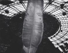Kozo Miyoshi Kusatsu, Japan, 1988 [large banana leaf at center] Gelatin silver print