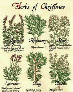 Herbs that suit Christmas and Yule especially well. Samhain, Pagan Yule, Mabon, Noel Christmas, All Things Christmas, Winter Christmas, Winter Holidays, Christmas Crafts, Pagan Christmas Tree