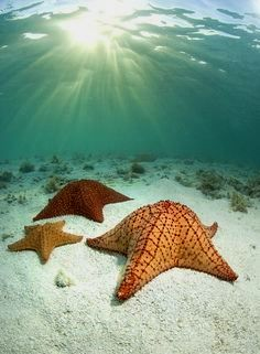 Starfish Star of the Sea Digital Sages Holistic Living Done Right