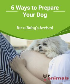 6 Ways to Prepare Your Dog for a Baby's Arrival   In many homes, pets are treated as if they were people. Thousands of couples consider their pets as their children. So, how can you prepare a dog for the arrival of a baby? In this article, we'll give you some tips to help you.