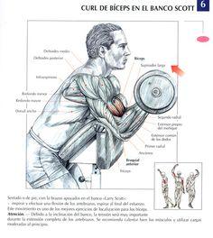 Ejercicios Biceps: Curl de bíceps en el banco scott by raul391970, via Flickr