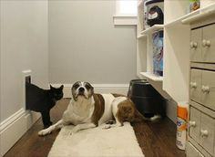 Pet-Proofing Your Home: A Room-by-Room Guide.  http://www.houzz.com/ideabooks/22944505/list/Pet-Proofing-Your-Home--A-Room-by-Room-Guide #bedding #home #pets