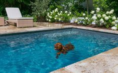 This is how we'd like to be spending our day off. This four-legged friend is enjoying his new pool! Swimming Pool Designs, Swimming Pools, Blue Pool, Luxury Pools, Pool Builders, Spa Services, Day Off, Four Legged, Aqua Blue