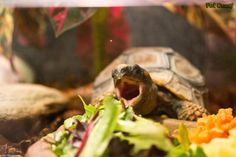 Turtle eating :)