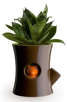 Qualy Log & Squirrel Plant Pot - the squirrel hides when your plant needs watering.