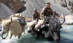 Chinese soldiers patrol Khunjerab Pass, border of China - Pakistan, highest paved int'l border crossing in the world Musk Ox, War Machine, People Around The World, Camel, Moose Art, Lion Sculpture, Arms, China, Culture