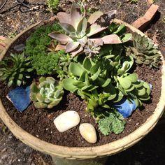 My first succulent planter!