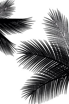 best wallpaper for iPhone Get Good Black Wallpaper for Smartphones Today Black Wallpaper Iphone, Screen Wallpaper, Nature Wallpaper, Black Backgrounds, Wallpaper Backgrounds, Mode Poster, Black And White Aesthetic, Black And White Pictures, Home Decor Wall Art