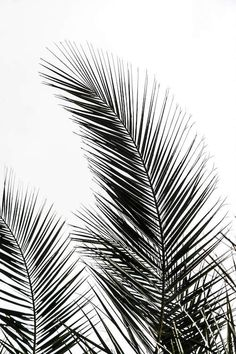 'Palm Leaves I' Graphic-Art-Print auf Leinwand Framed Art Prints, Wall Art Prints, Graphic Art Prints, Reproductions Murales, Art Blanc, L Wallpaper, Bedroom Wallpaper, Image Deco, Poster Online
