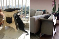 Spectacular Modern Cat Furniture From Brazil
