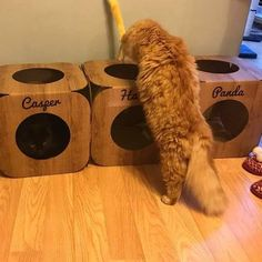 Awwww  look at that fuzzy ginger butt  and that cute little face  awww we are so glad they like them  #cat #catsofinstagram #cats_of_instagram #catfurnature #catfurniture #catsinboxes #cattoy #INSTACAT_MEOWS #cutecat #PurrMachine #catsinboxes #catbox #Excellent_Cats #BestMeow #dailykittymail #thecatniptimes #catcube #catpod #ArchNemesis #FlyingArchNemesis #myindoorpaws #ififitsisits #cutecatcrew #catchalet #catnip #themeowdaily #kitty #dailykittymail #catgrass