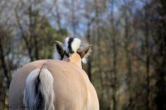 My beautiful horse!