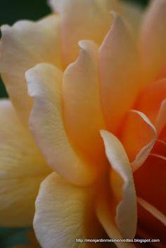 Mon Jardin Mes Merveilles: Froufrous anglais