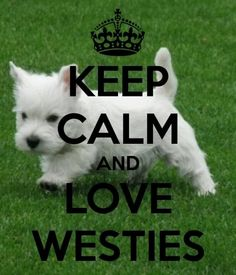 Calm and Westie should never be in the same sentence! But sometimes it just depends...